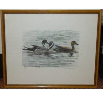 "Print ""northern pintails"", signed HAINARD."