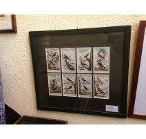 "Engraving ""8 miniatures of birds"""