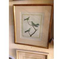 """Gravure """"Oiseaux de Cayenne"""" signée MARTINET"""