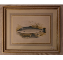 """Gravure rehaussée à l'aquarelle """"salmon"""