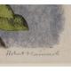 "Gravure ""Chouette Chevêche"" signée HAINARD"