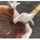Bain d'oiseaux en forme de coquillage bas