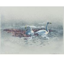 """Lithographie """"Le couple de cygnes"""" signée COSANDEY"""