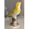 "Oiseau ""Verdier"" en porcelaine de Hertwig"