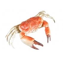 Crabe en résine