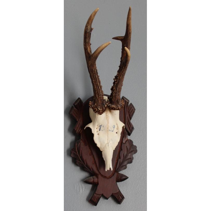 Trophée de chasse Masacre de chevreuil