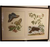 Double gravure encadrée papillons et grenouille