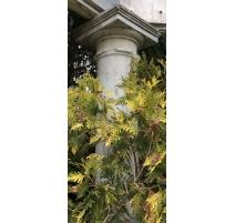 Suite de 4 colonnes en marbre de Carrare