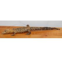 Aligator naturalisé