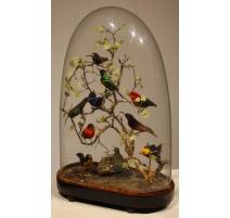 Groupe d'oiseaux naturalisés sous un globe