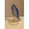 Poisson bleu en verre de Murano