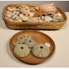 Collection de coquillages anciens