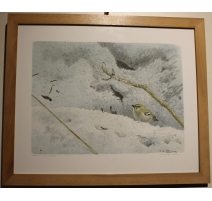 """Engraving """"Chiffchaff of Pallas"""" signed RHYME"""