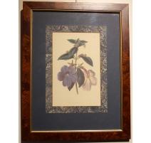 "English engraving ""Flowers"", frame magnifying glass"
