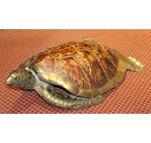 Carapace de tortue marine montée en laiton