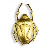 """墙上的装饰""""虫""""黄金"""