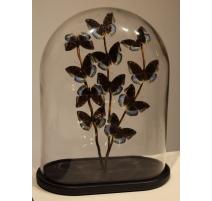 """Globe de papillons """"Lexias pardalis jadeitina"""""""