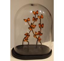 Globe de papillons oranges