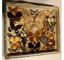 Papillons, scorpion et lézard volant naturalisés