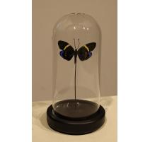 Globe rond au papillon noir
