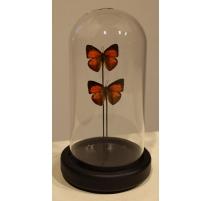 Globe rond aux papillons orange