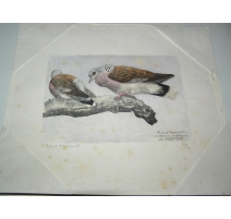"Burning ""Doves"", signed"